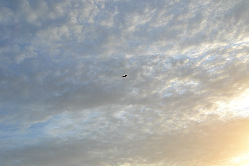 The sky and a tiny bird